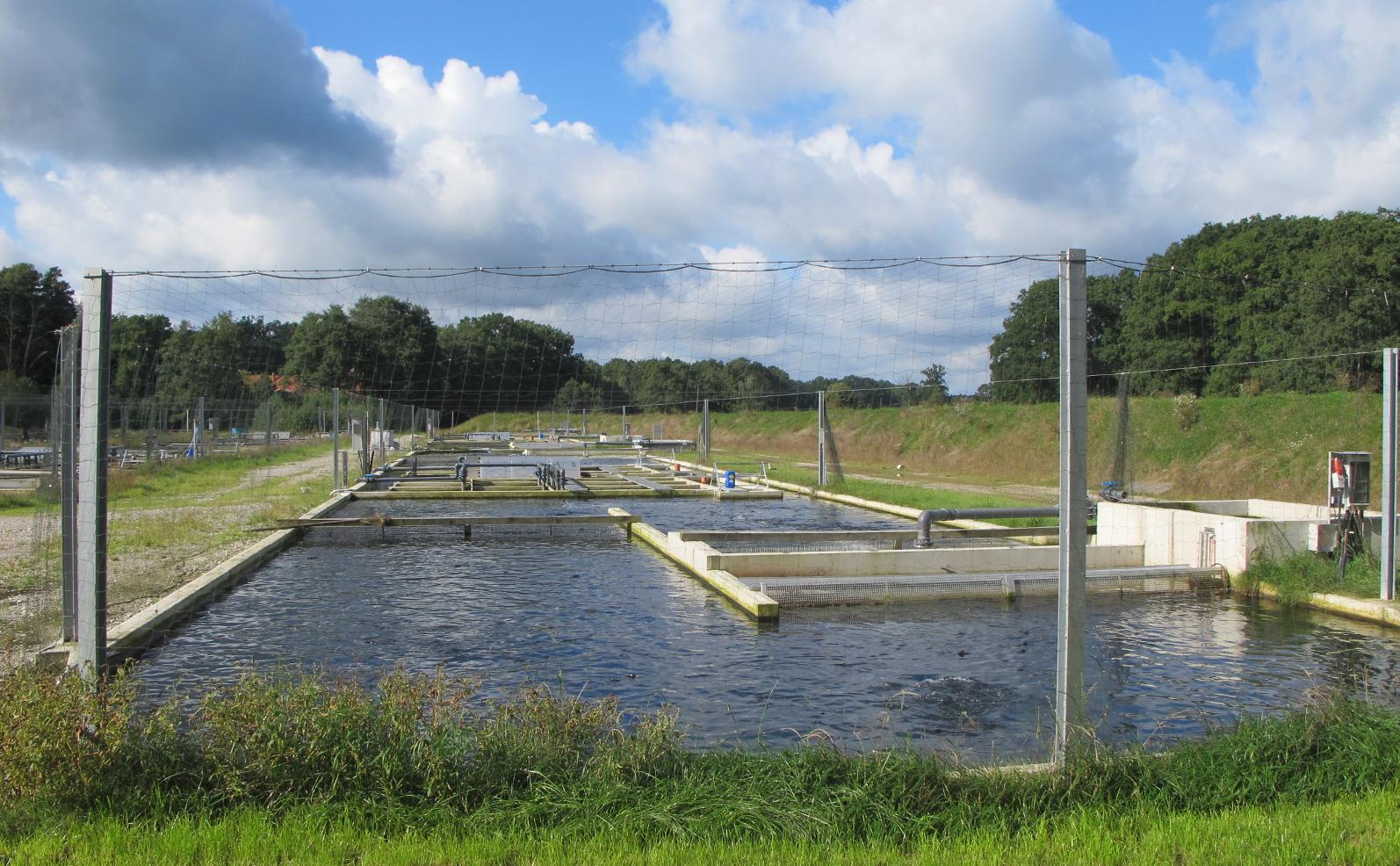 Danish fish farm