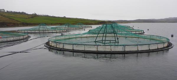Salmon farm - Ireland