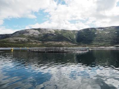 salmon production Norway
