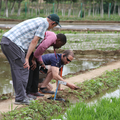 inspection of rice plants