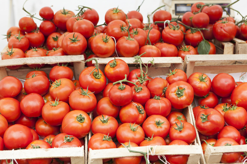 Tomatoes are Morocco´s agricultural export hit - agri benchmark